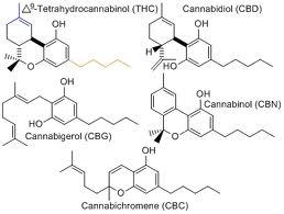 How Medical Marijuana Helps