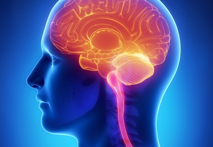 How Cannabis Affects the Brain by UPG