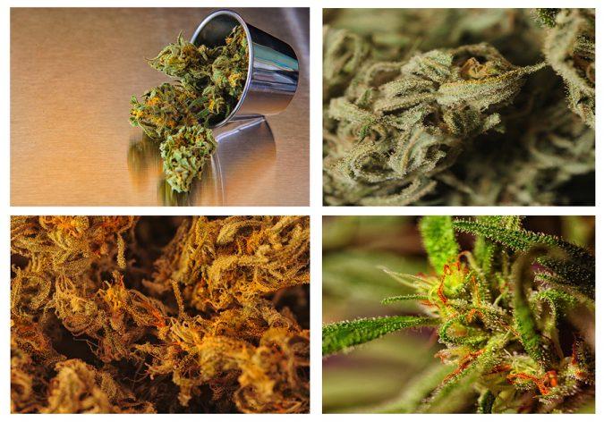 THC, THCA, CBD, CBC, CBN: Medical Marijuana Compisition, The Chemicals in Cannabis