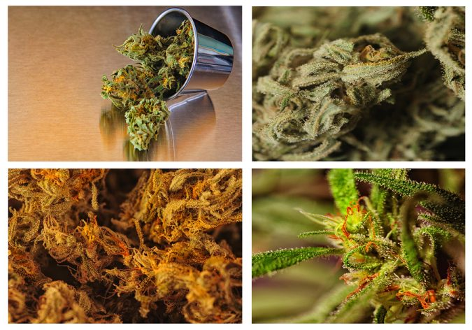 THC, THCA, CBD, CBC, CBN: Medical Marijuana Compisition, The Chemicals in Cannabis