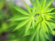 Top 5 Cannabinoids That Heal Your Body and Mind