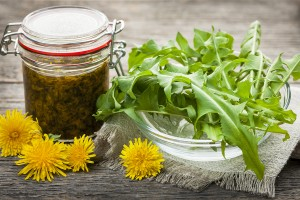 Foraged edible dandelions flowers and greens with jar of dandeli