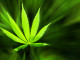 Top 5 Healing Terpenes: Terpenes That Amplify the Healing Power of Cannabis