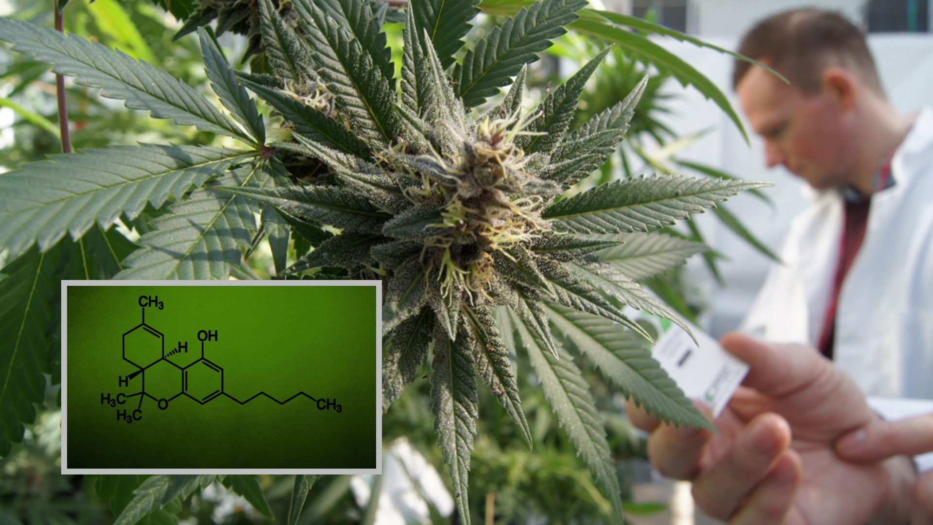 Cannabis Research – The Time is Now