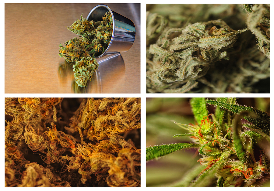 Types of Medical Marijuana Strains