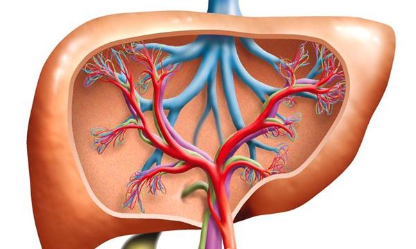Liver Disease and Medical Marijuana Treatments