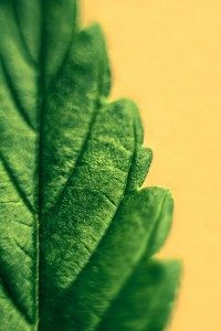 Perimenopause Part 2: How Cannabis Can Help with Hormone Induced