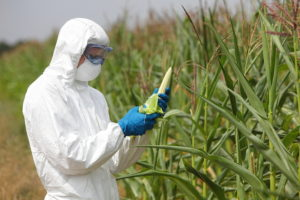 GMO,profesional in uniform goggles,mask and gloves examining co