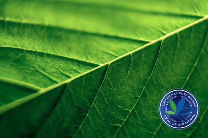 Cannabinoids Part 2: A Primer in CBD Information, the Heart of Cannabinoid Healing