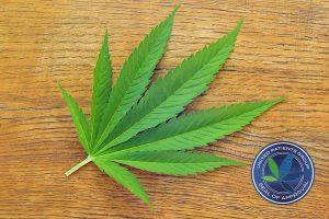 Consume Medical Cannabis