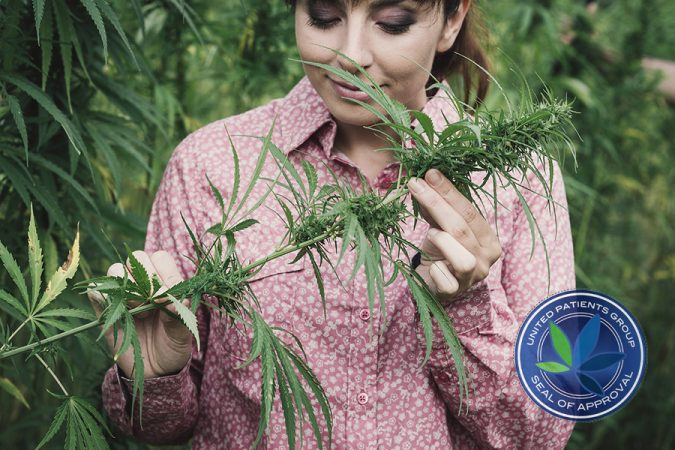 What are Terpenes and Why Are They Important
