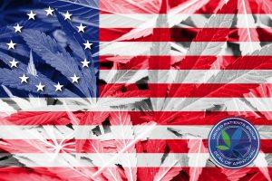 Betsy Ross Flag on cannabis background. Drug policy. Legalization of marijuana