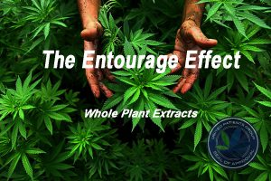 The Entourage Effect; Whole Plant Extracts: So Much More than THC and CBD effects of cannabis Cannabis Oil