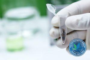 Close up of Analysis of marijuana in laboratory