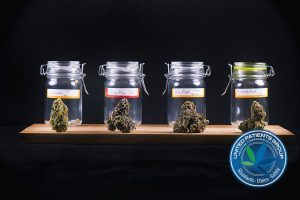 Assorted cannabis bud strains and glass jars isolated on black b