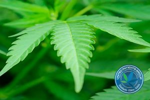 The Endocannabinoid System: An Inside Look by UPG – United
