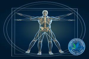 Skeleton In Vitruvian